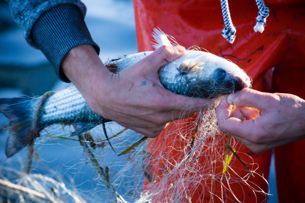 herkomst-freshly-fish-visbox
