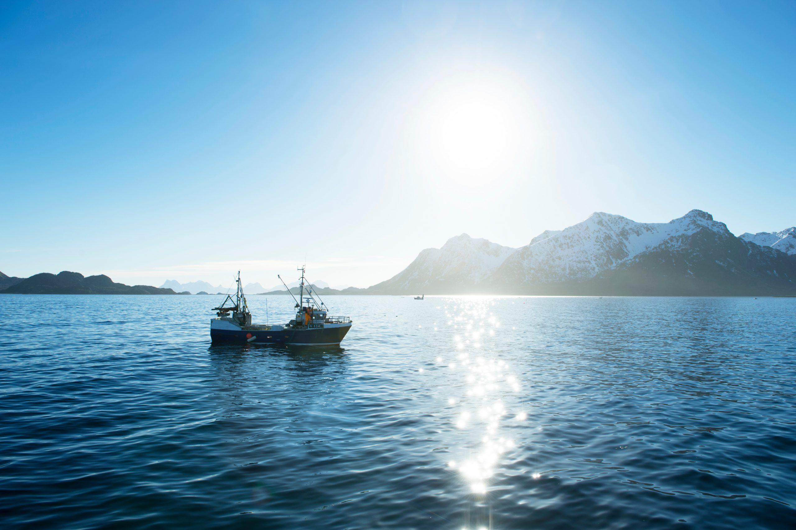Duurzame IJslandse kabeljauw