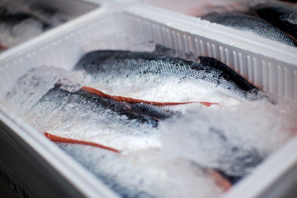 Verse vis of diepvries vis